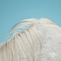 Hurts So Good. Gorgeous New Album: Widowspeak – All Yours